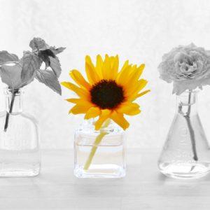 花の写真(加工後)